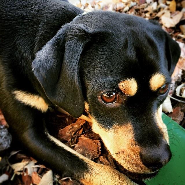 Sombra Perro